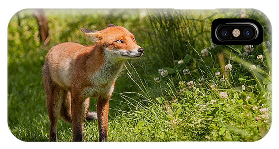 British Wildlife Centre IPhone X Case featuring the photograph A British Red Fox by Dawn OConnor