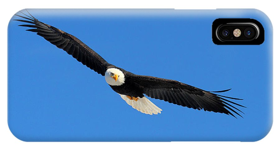 Doug Lloyd IPhone X Case featuring the photograph American Bald Eagle by Doug Lloyd
