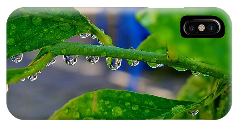 Close Up; Raindrops; Green; Leaf; Reflection; Nature; Plant; Garden; Water; Wet; Droplets; Background; Decorative; Clear; IPhone X Case featuring the photograph Raindrops On Leaf by Werner Lehmann