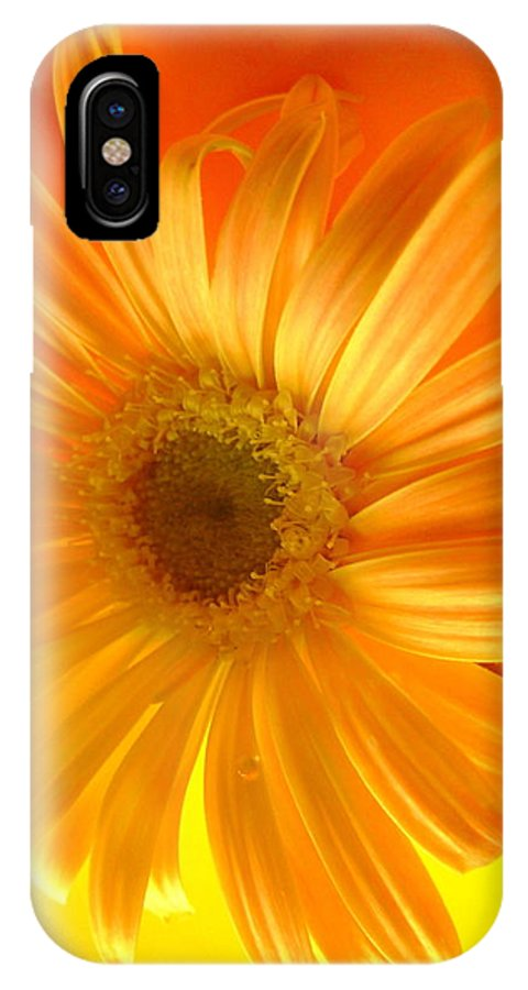 Gerbera Photographs IPhone X Case featuring the photograph 7321-002 by Kimberlie Gerner
