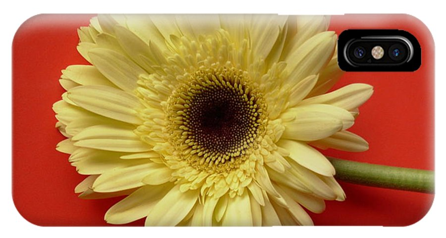 Gerbera Photographs IPhone X Case featuring the photograph 7711 by Kimberlie Gerner