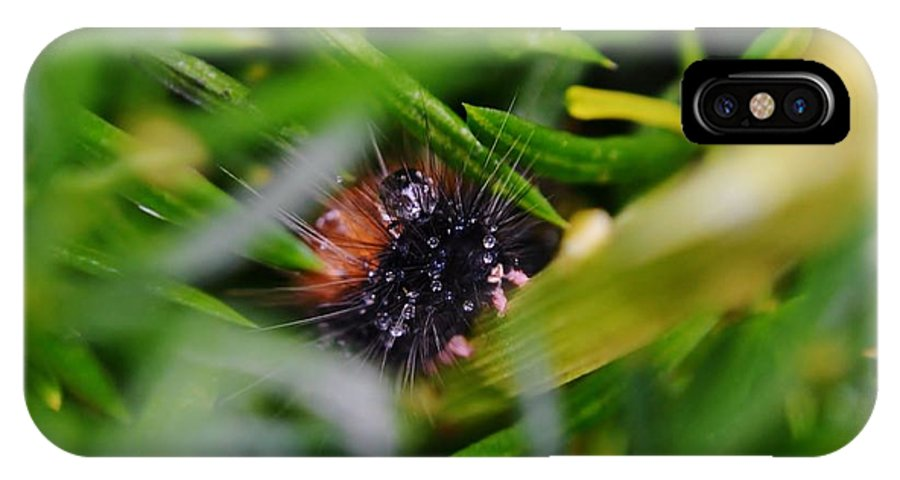 Insect; Hairy; Brown; Bristles; Plant; Green; Garden; Winter; Background; Feet; Stem; Evergreen; Black; Drops; Droplets; Raindrops; IPhone X Case featuring the photograph Hairy Caterpillar by Werner Lehmann