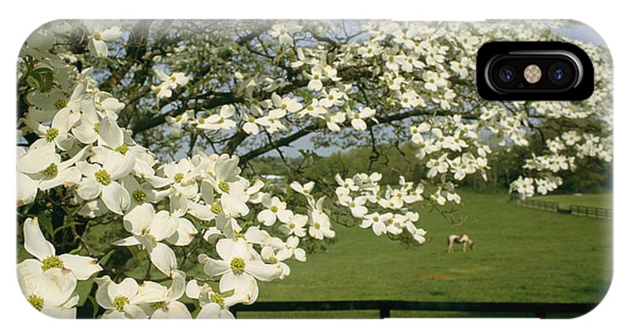 Plants IPhone X / XS Case featuring the photograph A Blossoming Dogwood Tree In Virginia by Annie Griffiths