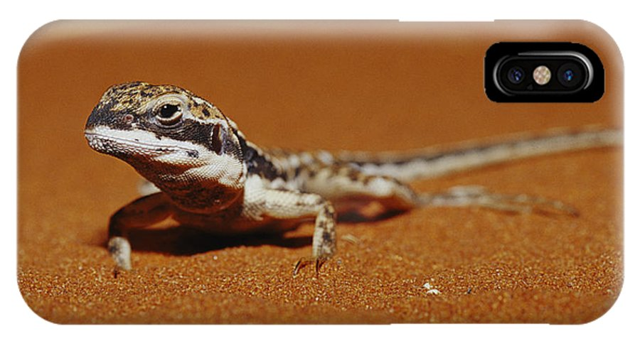 Australia IPhone X / XS Case featuring the photograph A Close View Of A Military Sand Dragon by Jason Edwards
