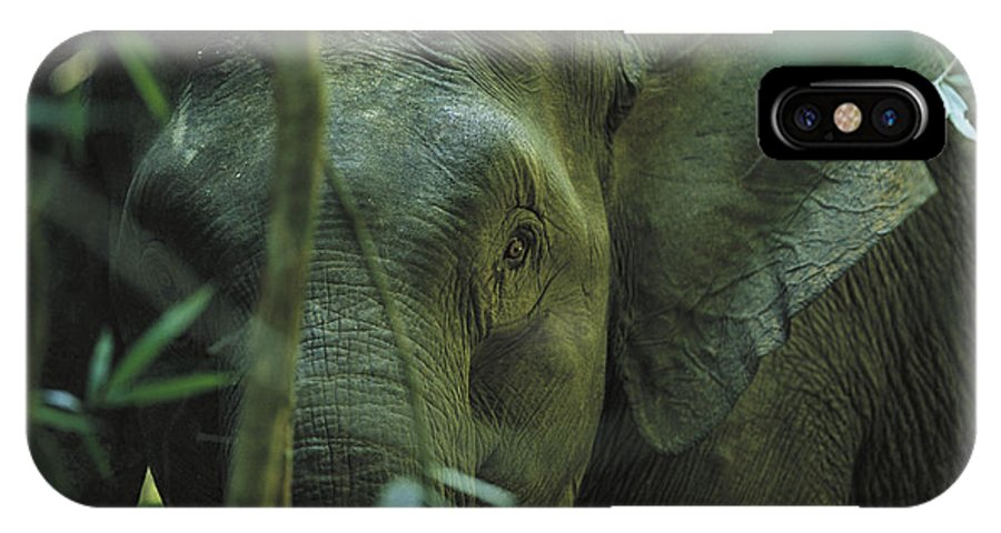 Asia IPhone X / XS Case featuring the photograph A Close View Of An Asian Elephant by Tim Laman