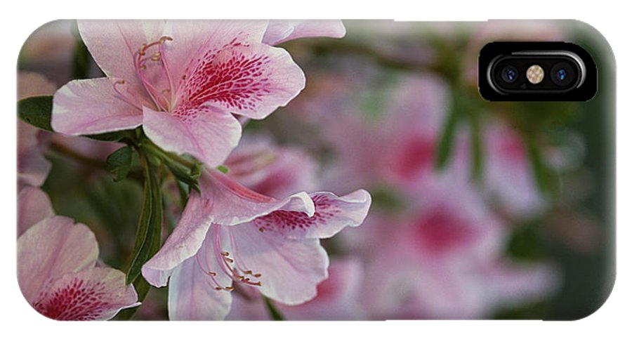 United States Of America IPhone X / XS Case featuring the photograph A Close View Of Pink Azalea Blossoms by Raymond Gehman