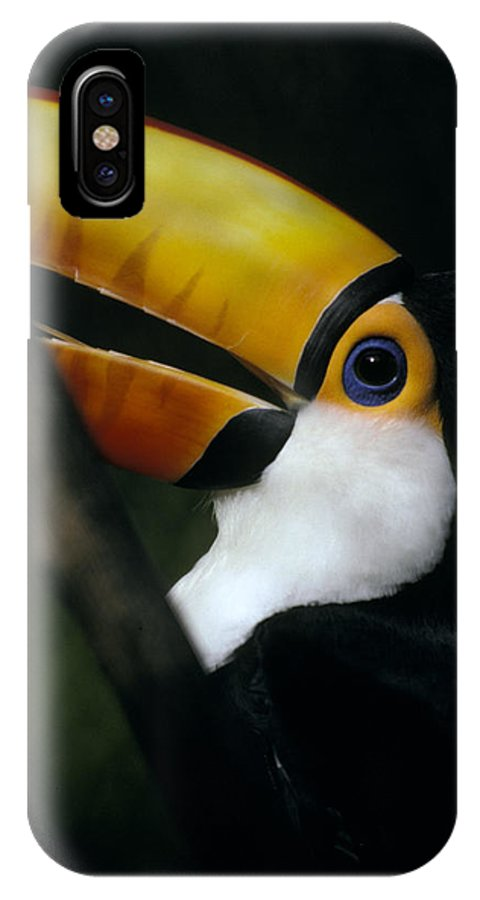 Colorful IPhone X Case featuring the photograph A Colorful Toco Toucans Blue Eye by Jason Edwards
