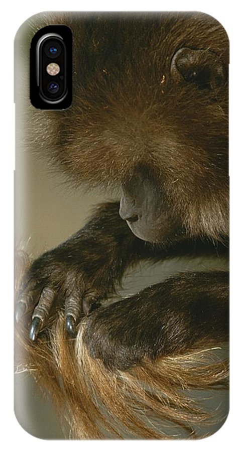 Animals IPhone X / XS Case featuring the photograph A Female Gelada, Theropithecus Gelada by Michael Nichols
