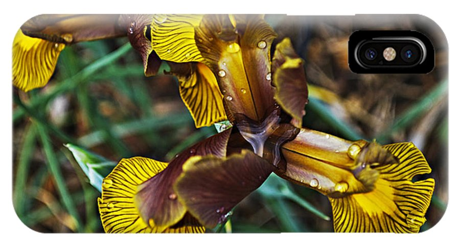 Iris IPhone X Case featuring the photograph A Fine Pair by Christopher Gaston