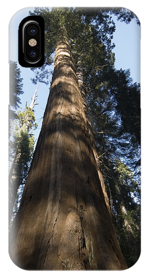 Nobody IPhone X Case featuring the photograph A Giant Redwood In The Mariposa Grove by Bill Hatcher