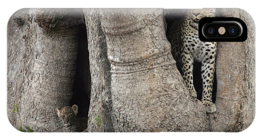 Okavango Delta IPhone X Case featuring the photograph A Leopard And Cub Inside A Giant Baobab by Beverly Joubert