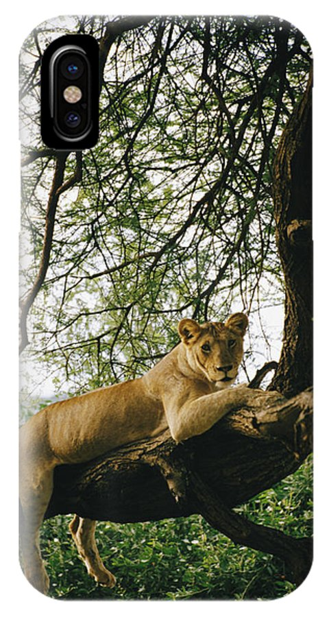 Animals IPhone X / XS Case featuring the photograph A Lion Panthera Leo Relaxes On A Tree by Skip Brown