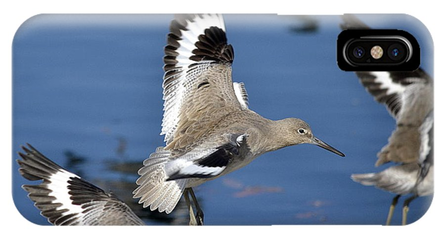 Willets IPhone X Case featuring the photograph A Little Flurry by Fraida Gutovich