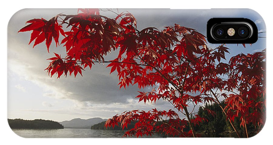 North America IPhone X / XS Case featuring the photograph A Maple Tree In Fall Foliage Frames by Richard Nowitz
