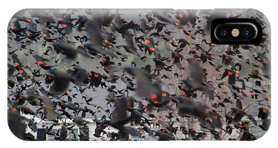 Sooc IPhone X Case featuring the photograph A Mob Of Red-winged Blackbirds by Ericamaxine Price