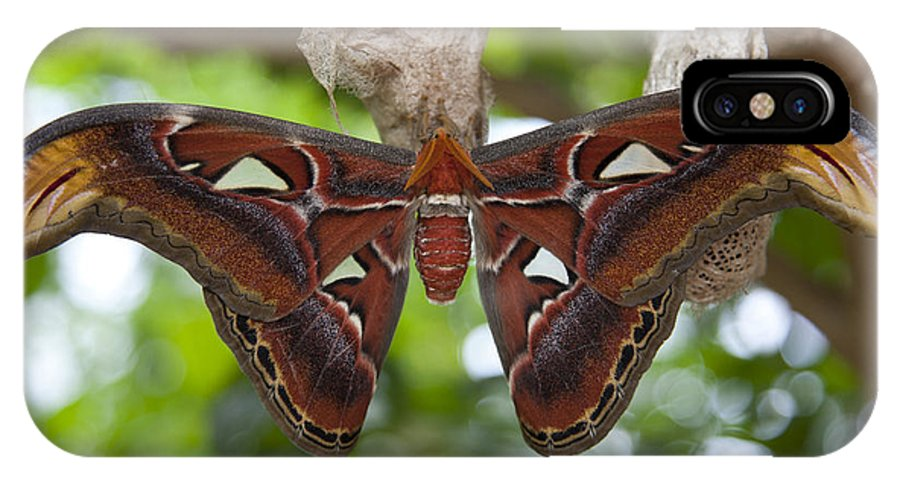 Attacus Atlas IPhone X Case featuring the photograph A Moth Clings To Its Cocoon Immediately by Taylor S. Kennedy