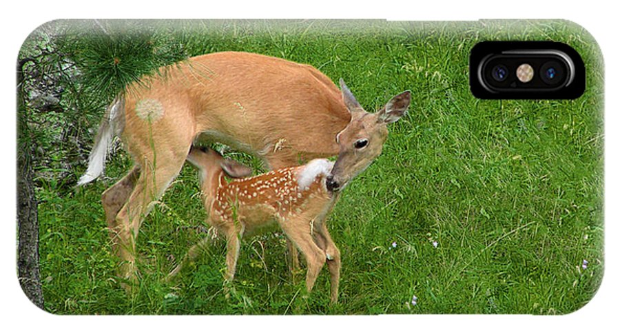 Doe IPhone X Case featuring the photograph A Mother's Love - Doe And Fawn by Christine Till