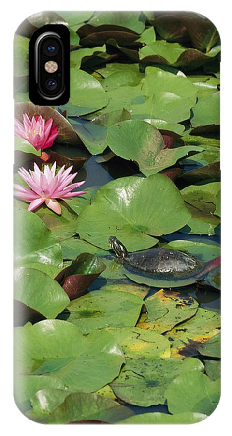 Animals IPhone X / XS Case featuring the photograph A Painted Turtle Rests On A Water Lily by George Grall