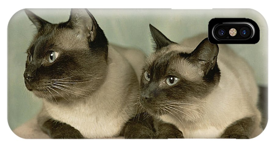 Portraits IPhone X / XS Case featuring the photograph A Pair Of Siamese Cats by Willard Culver