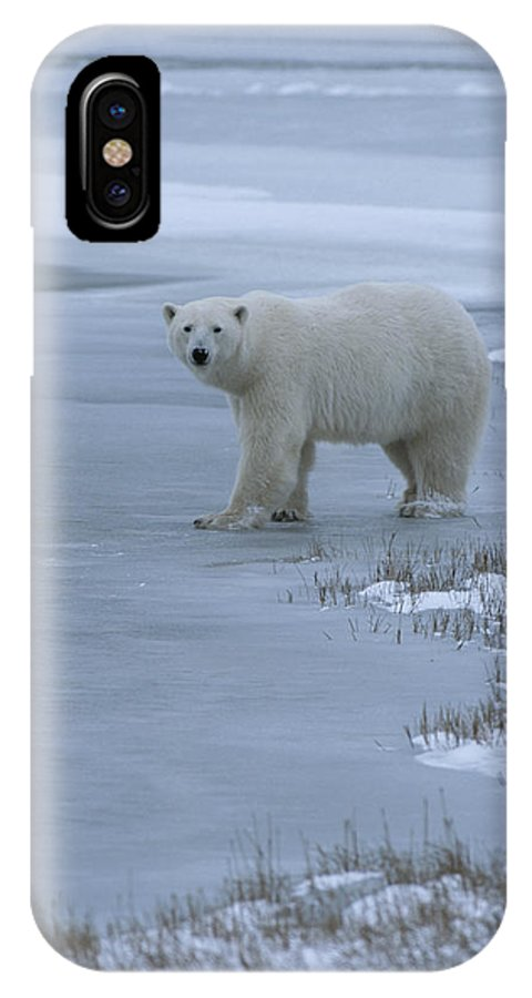 Animals IPhone X / XS Case featuring the photograph A Polar Bear Stepping Onto Ice by Tom Murphy