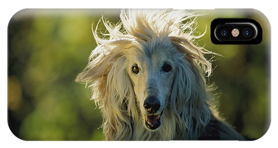 Animals IPhone X / XS Case featuring the photograph A Portrait Of An Afghan Hound by Joel Sartore