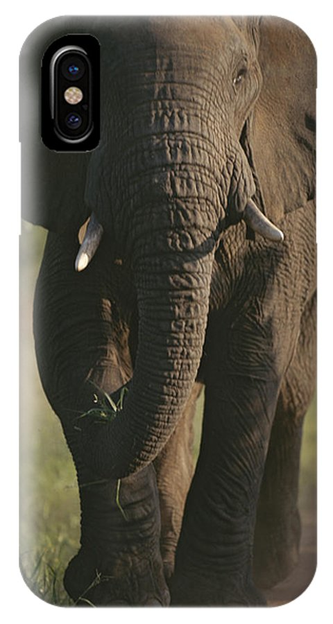 Africa IPhone X / XS Case featuring the photograph A Portrait Of An African Elephant by Tim Laman