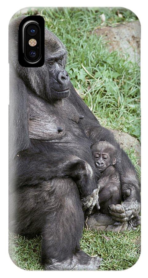 Western Lowland Gorilla IPhone X Case featuring the photograph A Relaxed Western Lowland Gorilla by Jason Edwards