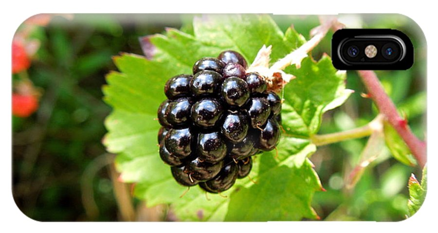 Blackberry IPhone X Case featuring the photograph A Ripe Blackberry by Renee Trenholm