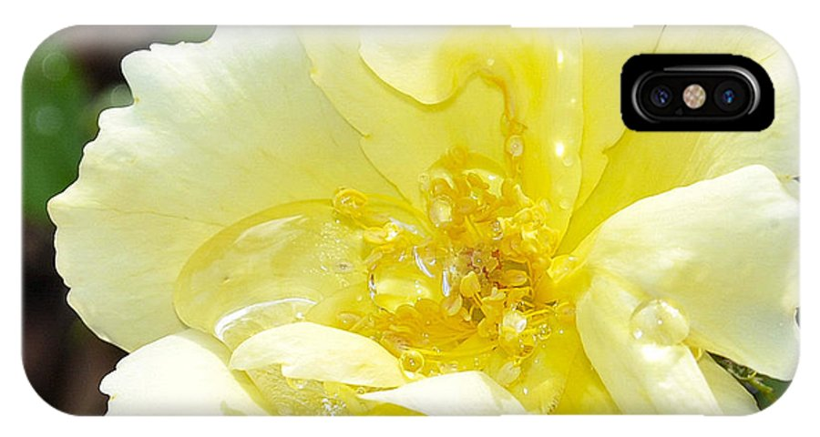 Rose IPhone X Case featuring the photograph A Rose Is A Rose Rrp by Jim Brage