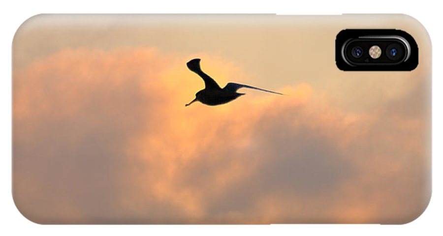 Seagull IPhone X Case featuring the photograph A Seagull Takes Flight by Bill Cannon