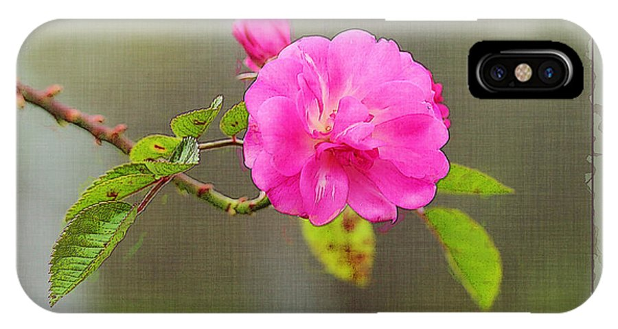 Rose IPhone X Case featuring the photograph A Single Rose by Judi Bagwell