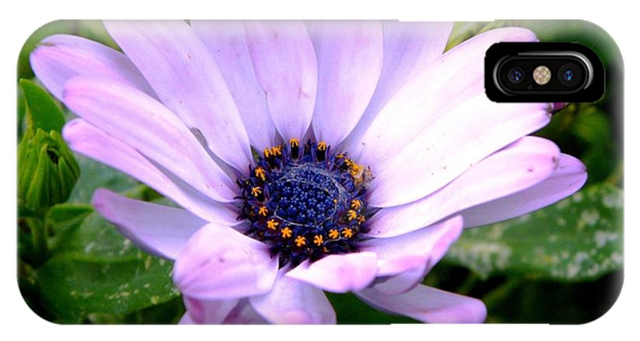 Flower IPhone X Case featuring the photograph A Spider's Center by Tisha Clinkenbeard
