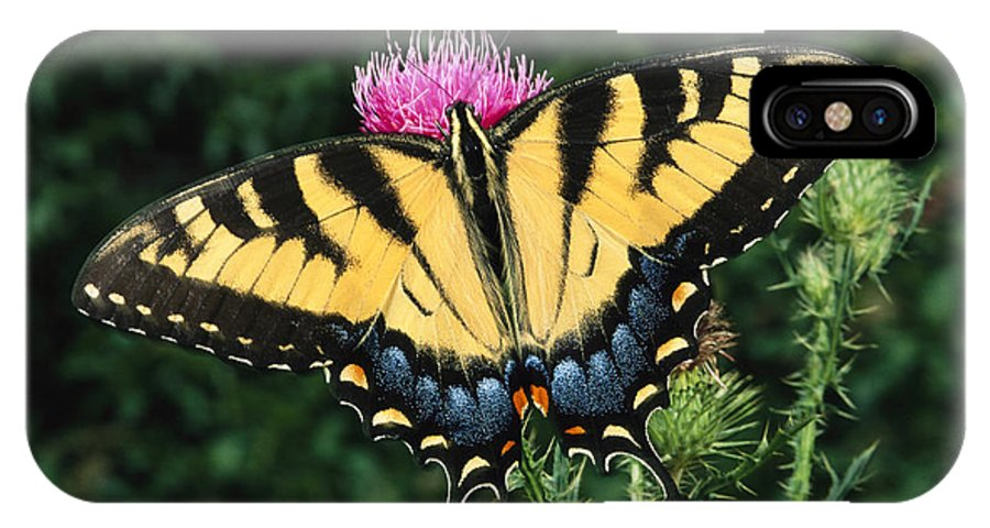 United States Of America IPhone X / XS Case featuring the photograph A Tiger Swallowtail Butterfly Feeds by George Grall