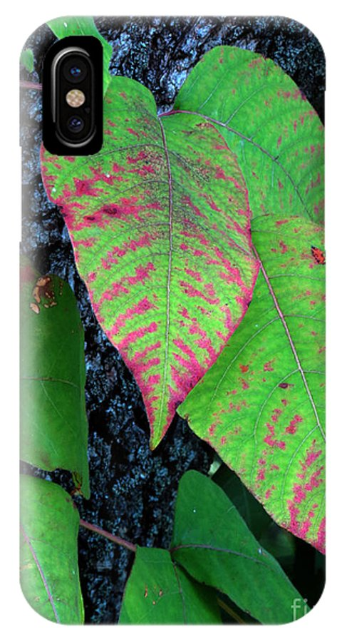 Foliage IPhone X Case featuring the photograph A Touch Of Autumn by Darleen Stry