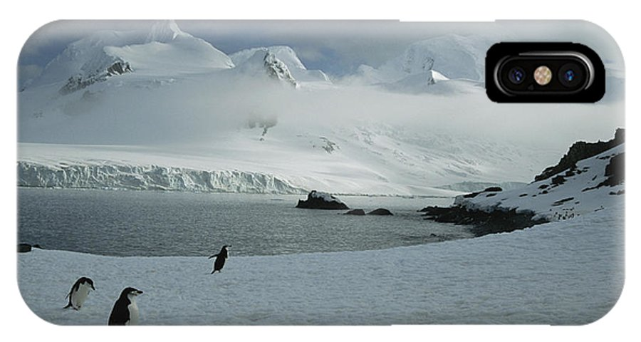 Antarctica IPhone X / XS Case featuring the photograph A Trio Of Chin Strap Penguins Amble by Tom Murphy