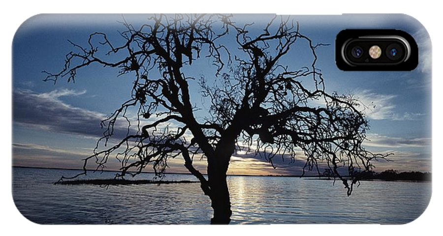 Scenes And Views IPhone X / XS Case featuring the photograph A View At Dawn Of A Silhouetted Tree by Jason Edwards