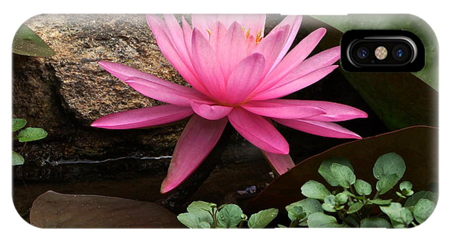 Pink Waterlily IPhone X Case featuring the photograph A Waterlily's Grace by Byron Varvarigos
