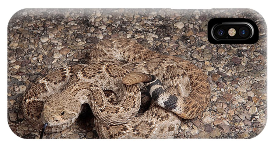 A Western Diamondback Rattlesnake IPhone X Case