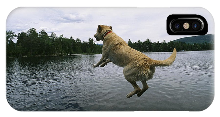 Animals IPhone X / XS Case featuring the photograph A Yellow Labrador Retriever Jumps by Heather Perry