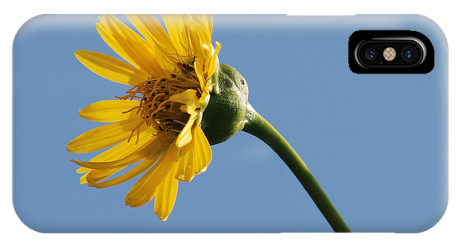 Wildflowers IPhone X Case featuring the photograph A Yellow Wildflower by Janice Adomeit