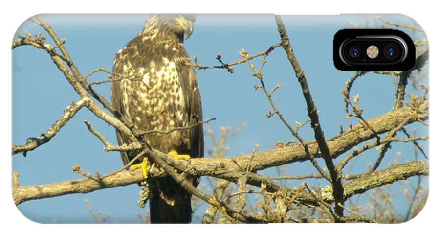 Eagles IPhone X Case featuring the photograph A Young Eagle Gazing Down by Jeff Swan