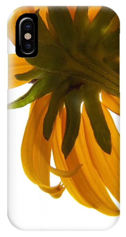 Flowers IPhone X Case featuring the photograph Abstract Black Eyed Susan IIi by Corinne Elizabeth Cowherd