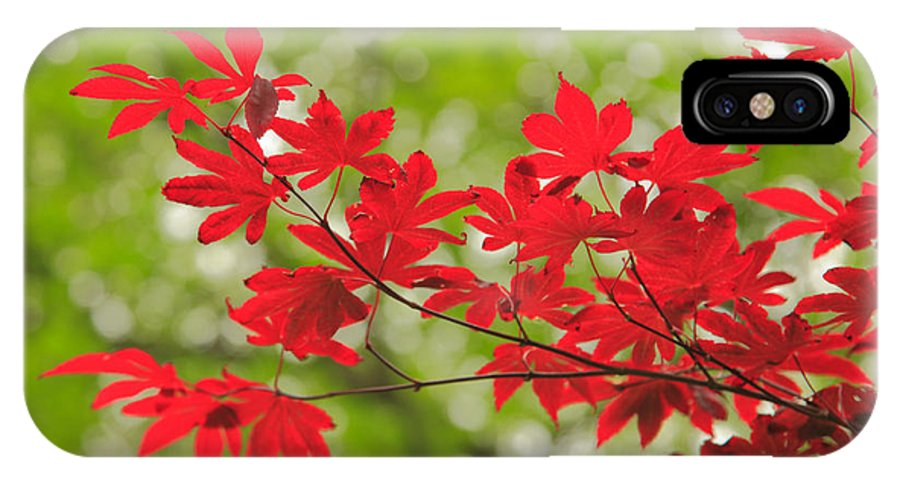 Maple IPhone X Case featuring the photograph Acer Leaves by Gaspar Avila