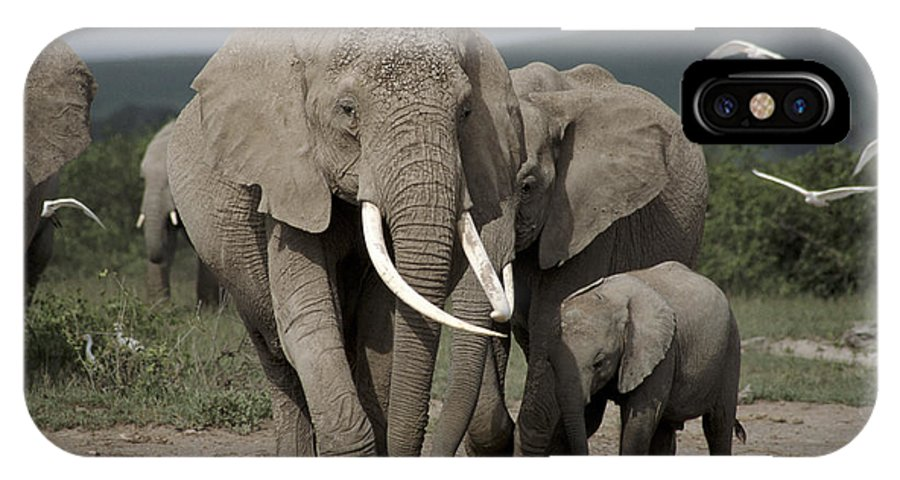 Npl IPhone X Case featuring the photograph African Elephant Loxodonta Africana by John Sparks