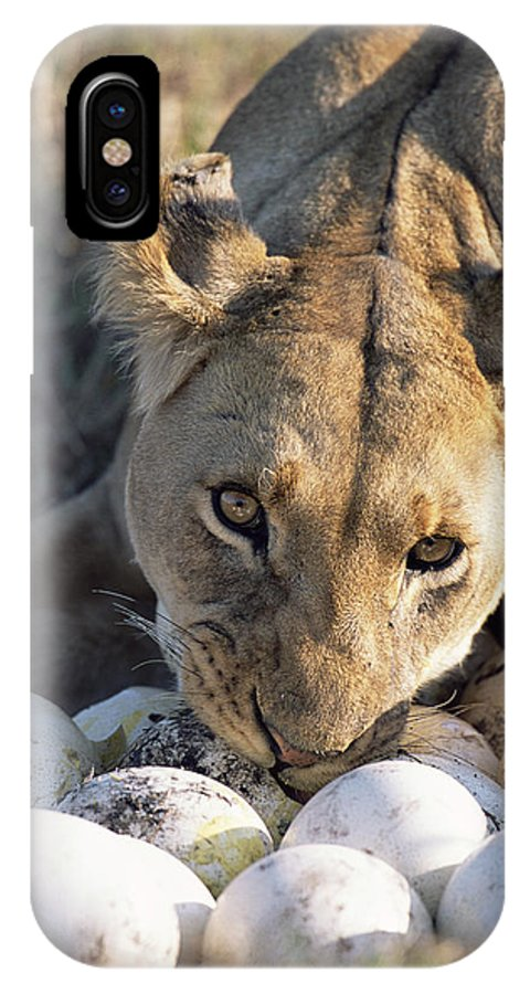 Npl IPhone X Case featuring the photograph African Lion Panthera Leo Raiding by Peter Blackwell