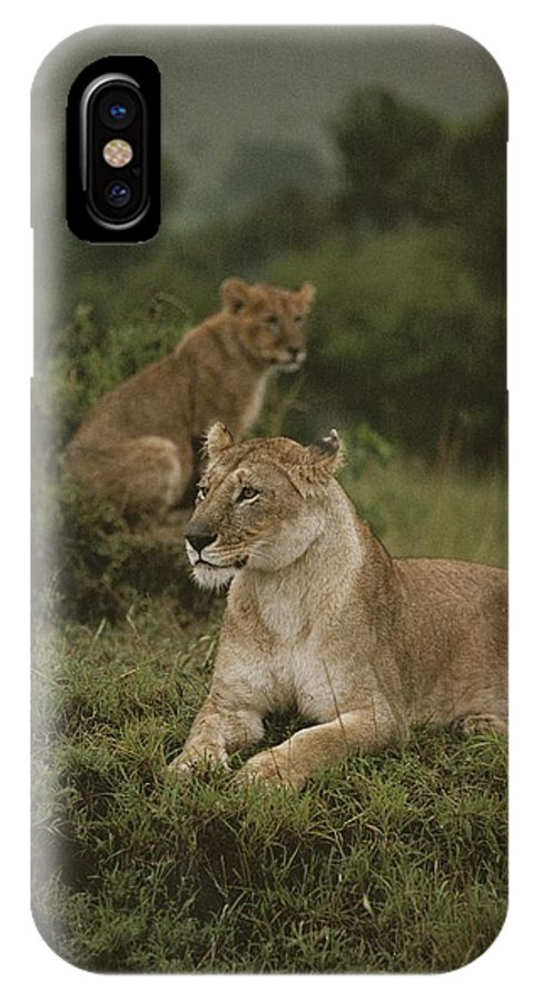 Panthera Leo IPhone X / XS Case featuring the photograph African Lionesses In Masai Mara by Anne Keiser