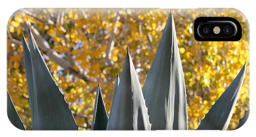Agave IPhone X Case featuring the photograph Agave Spikes In Autumn by Alycia Christine