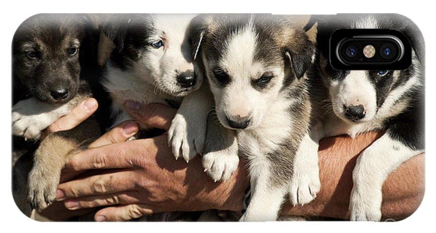 Alaska IPhone X Case featuring the photograph Alaskan Huskey Puppies by John Greim