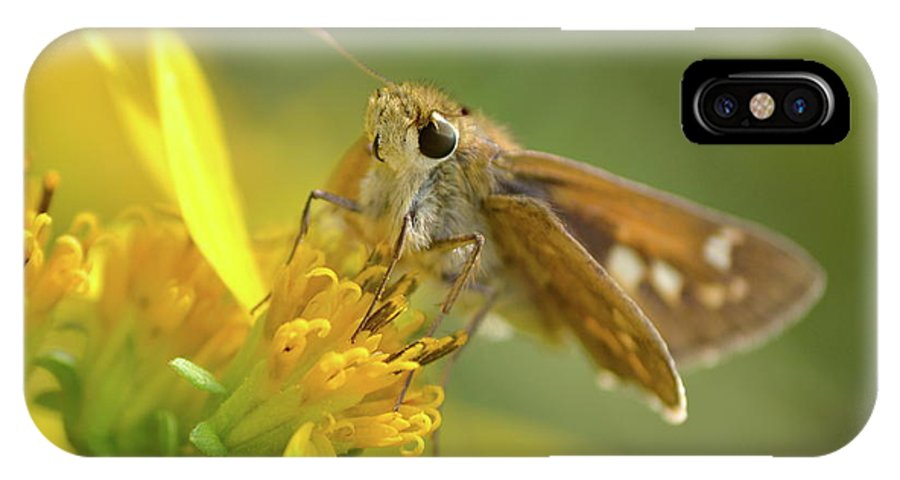 Skipper IPhone X Case featuring the photograph Alighted Skipper by JD Grimes