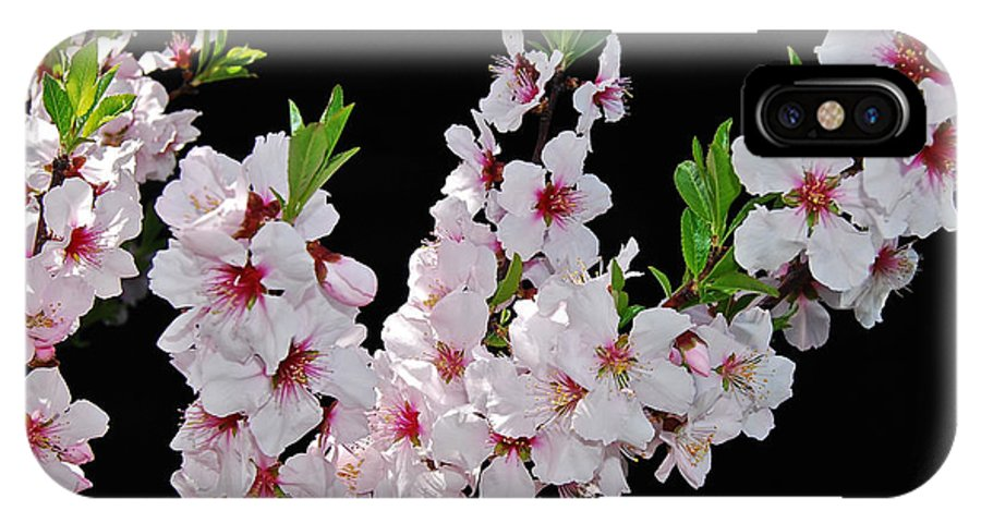 Almond IPhone X Case featuring the photograph Almond Blossom 0979 by Michael Peychich